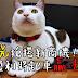 【貓奴▕ 進階實戰篇】 3 步驟快速知道籌碼結構 - 亞光(3019)