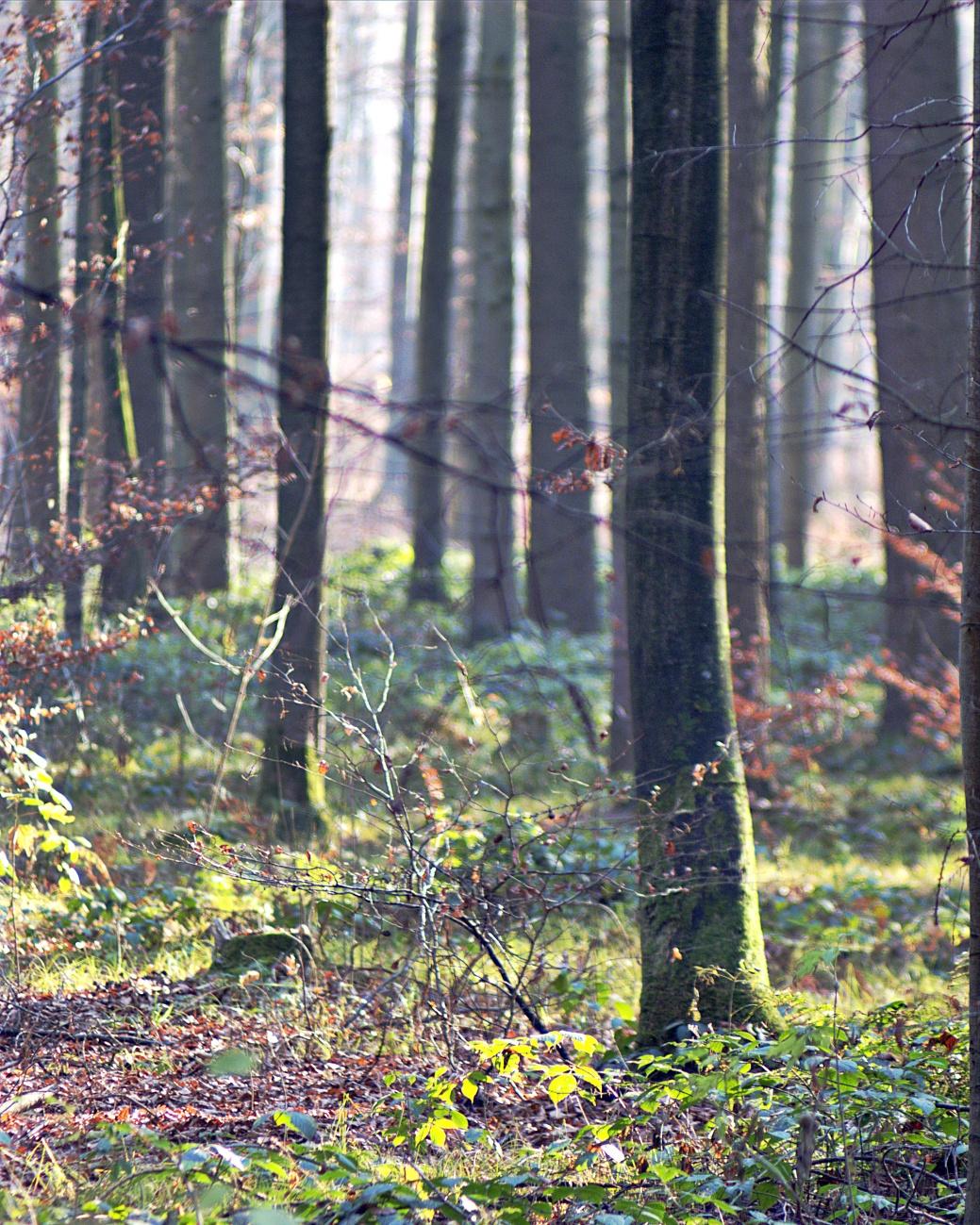 Bilder der Woche #49 (KW49/2020) – Im Wald