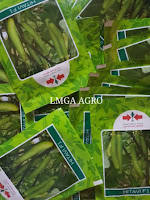manfaat terong, terung, jual benih terong, menanam terong, toko pertanian online, lmga agro