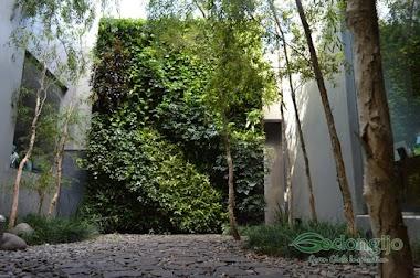 Tips Jitu Merawat Vertical Garden