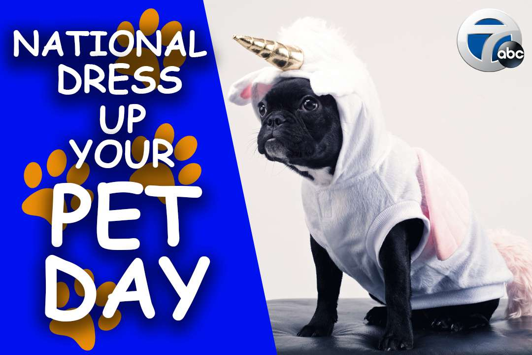 National Dress Up Your Pet Day Wishes for Instagram