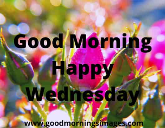 Have a great Wednesday