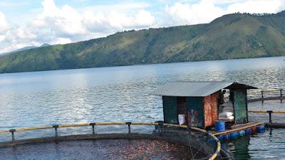 Warga Paksa PT Aquafarm Keluar dari Danau Toba sebelum 2029