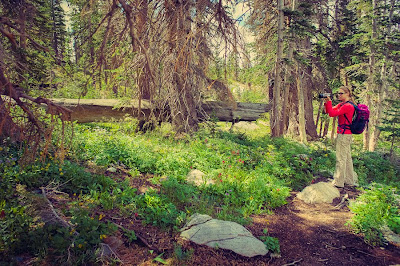 Hiking in the Medicine Bow National Forest