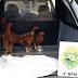 Cinco galinhas foram parar na delegacia após furto no Paraná