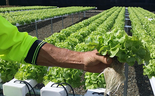 All about Hydroponic Farming