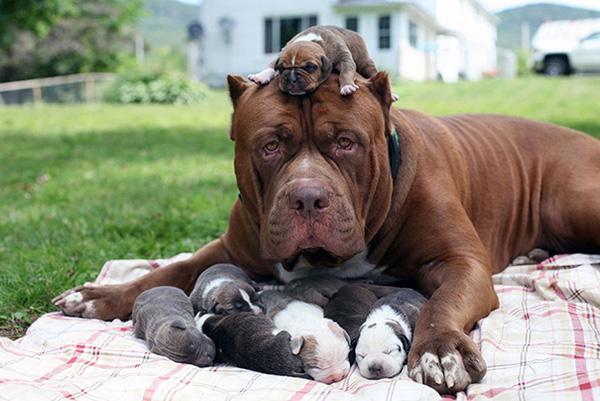 Giây phút hạnh phúc của những gia đình cún đông con