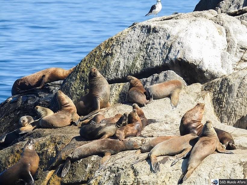Leões Marinhos na Praia de Viña del Mar - Diário de Bordo Chile: 8 dias em Santiago e arredores