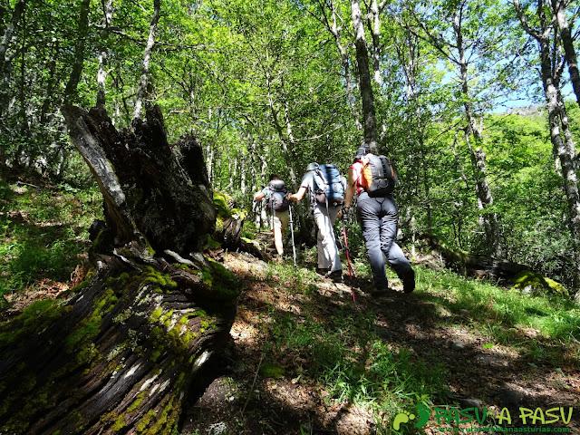 Ruta al Mustallar: Bosque en el Reventón