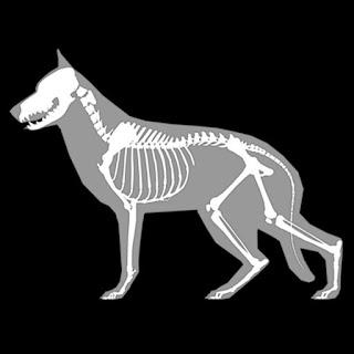 3D Dog Anatomy