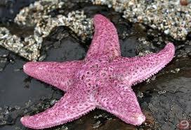 Bir Deniz Yıldızı Hikayesi 3