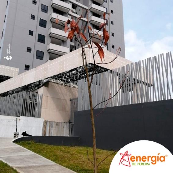 Mantenimiento a los árboles en la Avenida Juan B Gutiérrez