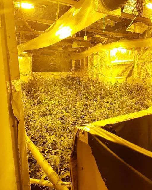 """العثور على مزرعة للقنب """"الحشيش"""" في شقة وسط امستردام"""