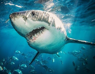 معنى حلم سمك القرش,تفسير حلم سمك القرش يهاجم شخص