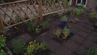 Herb plants in the patio