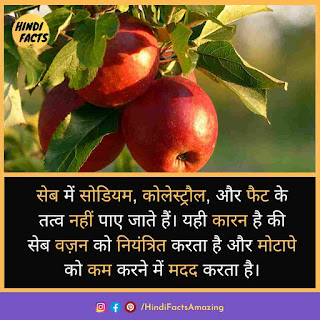 about apple in hindi