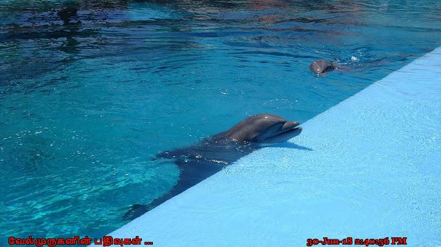 Bottle-nose Dolphins Las Vegas