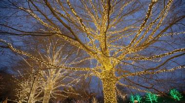 Un árbol con suculentas, luces y Navidad en Longwood Gardens