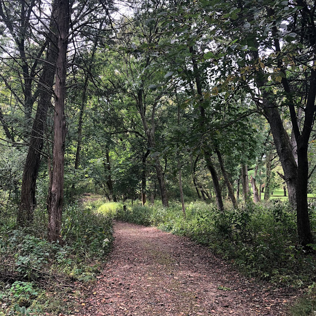 Welcoming forested path beckoning for adventure at University of Wisconsin - Madison Arboretum
