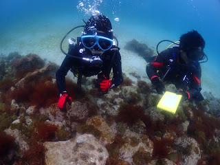 2021年4月4日の柏島ダイビング