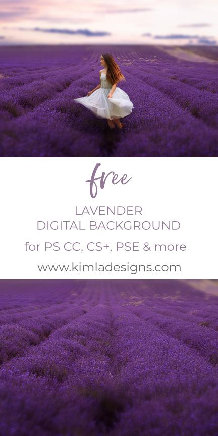 Lavender Field Digital Background