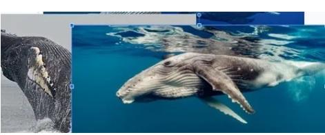 Cara Mudah Membuat Foto Kolase di Google Slide 9