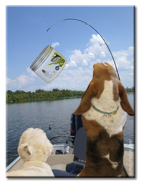 Basset hound with fishing pole and jar of Dr. Harvey's Health + Shine on the line. White dog in boat too.