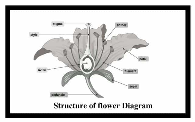 Structure of flower Diagram