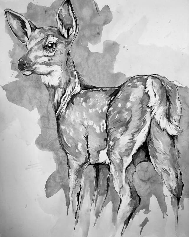 01-Fawn-A-Landerman-Animal-Drawings-Paintings-in-Graphite-and-Ink