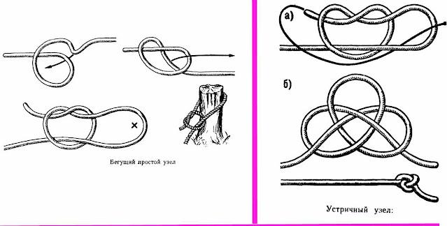 устричный морской узел