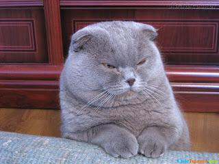 Kucing marah-marah