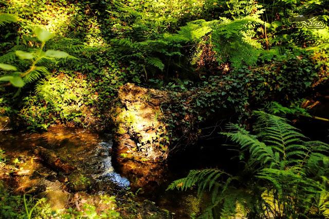 Bosque Galicia. Ruta de los Moiños