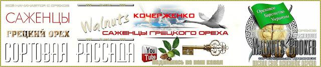 Сорт ореха Кочерженко описание Walnuts Broker