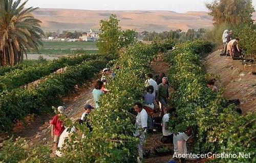 Cumplimiento de profecía de Isaías: Desierto florece en Israel