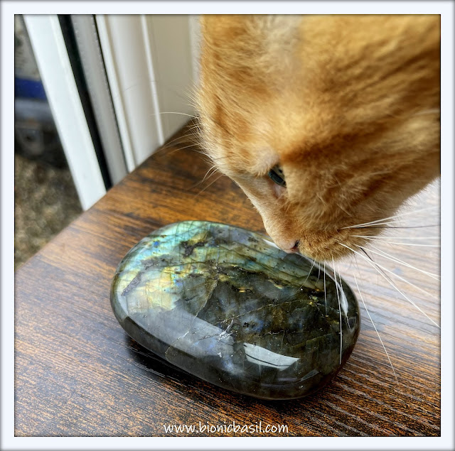 Mandalas on Monday ©BionicBasil® Colouring With Cats #118 Fudge Inspecting The Labradorite
