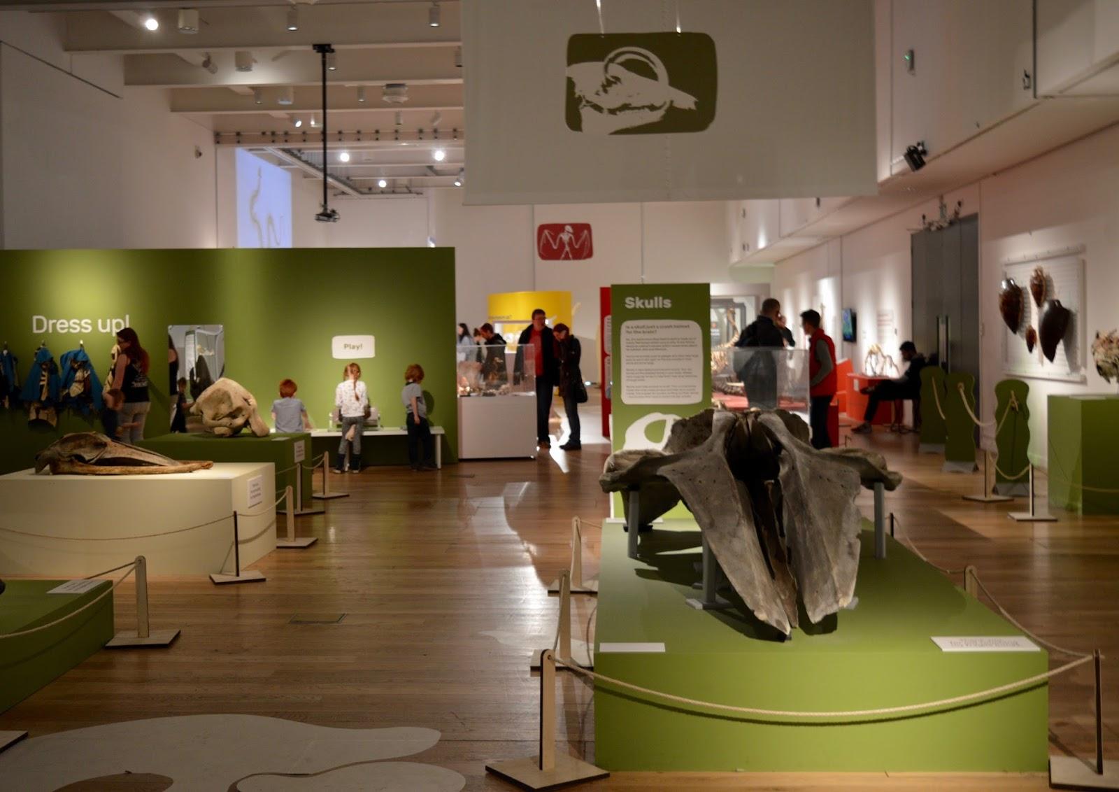 Bones Exhibition at Hancock Museum, Newcastle | exhibition hall