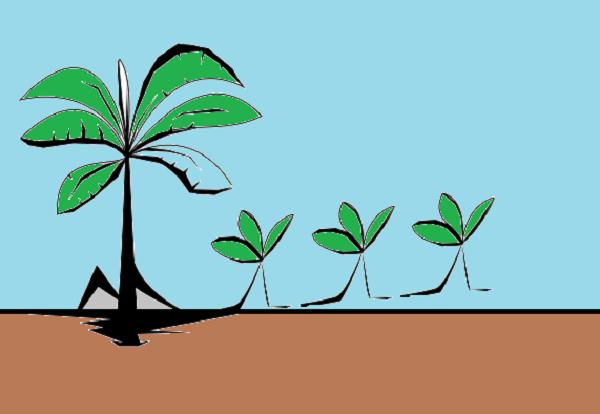 cara berkembang biak tumbuhan