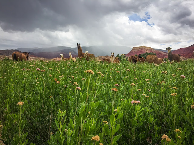 Lamele dintre Humahuaca si Tilcara ce m-au facut sa zambesc, Argentina