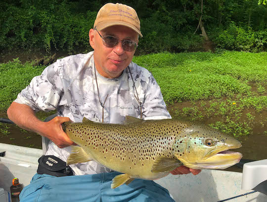 Trophy Brown trout on the Clinch River