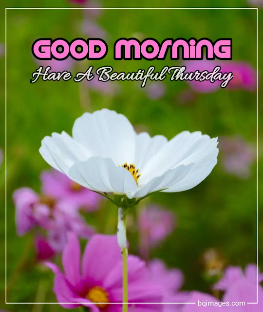 good morning have a blessed thursday