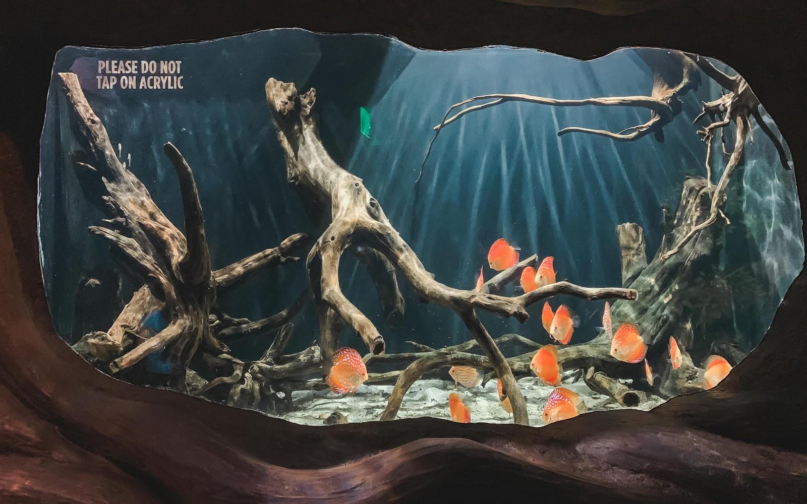 Georgia Aquarium: Things To Do in Georgia, USA
