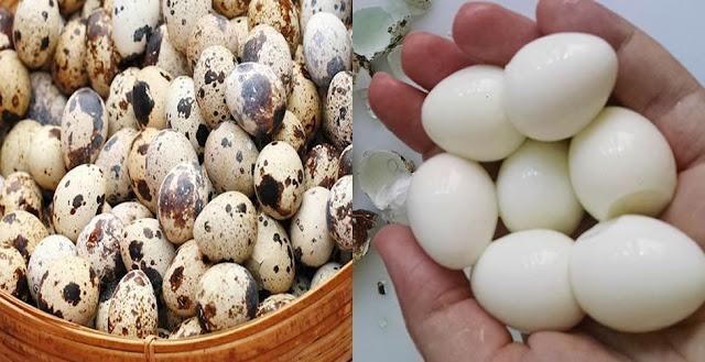 El huevo de codorniz tiene más beneficios de los que usted se imagina. ¡Mire aquí y se sorprenderá!