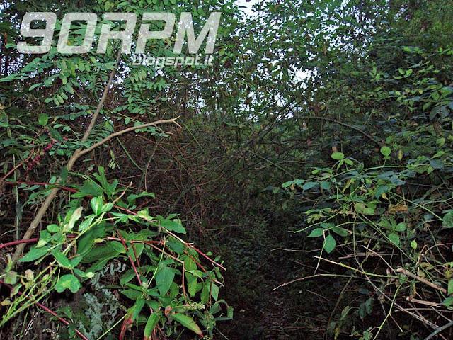 Un groviglio inestricabile di rovi e piante varie mi impedisce di seguire la traccia ufficiale del percorso