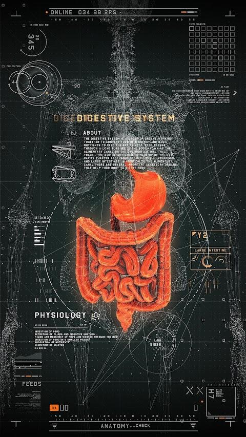 Hệ thống tiêu hóa hình học