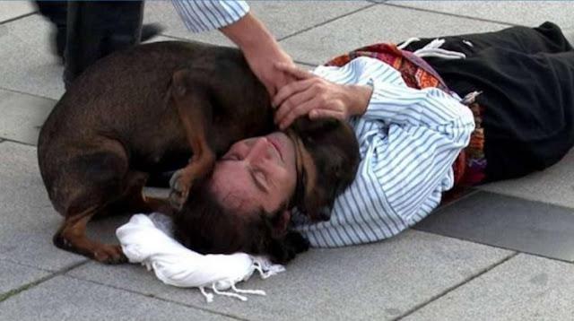 Бродячая собака вмешалась в спектакль, чтобы «спасти» актера, и растрогала всех зрителей
