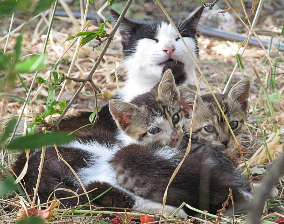 Induk Kucing dan Anak Kucing