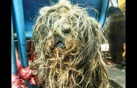 Грумер заметил в мусорном баке волосатого монстра, но стоило его постричь, как появился милый пёсик