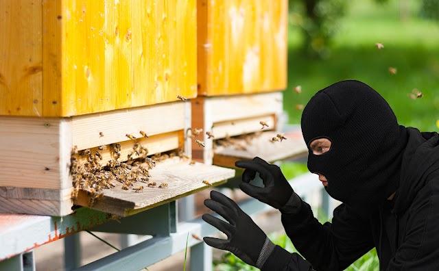 Πως διώχνουμε τους κλέφτες απο το μελισσοκομείο αποτελεσματικά...