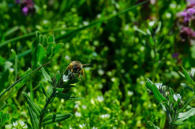 Avem nevoie de albine...