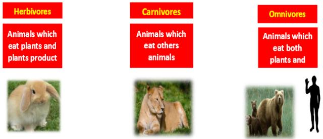 Herbivores, Carnivores, Omnivores